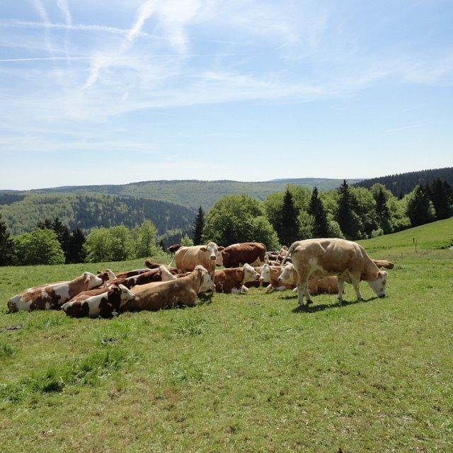 Frauenwald - Blick aufs Tal