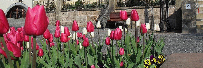 Goethe vorm Amtshaus mit Tulpen
