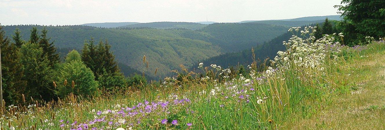 Frauenwald - Panorama Tränkbachtal