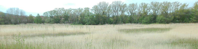 Brandenburger Teich 2020