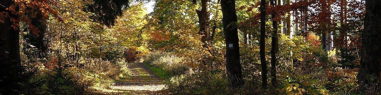 Buchenallee vom Jagdhaus Gabelbach nach Ilmenau im Herbst