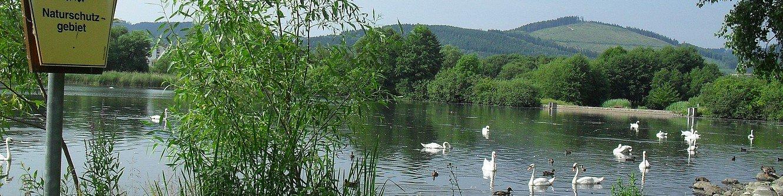 Naturschutzgebiet Großer Teich