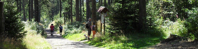 Wanderer im Wald am Kickelhahn