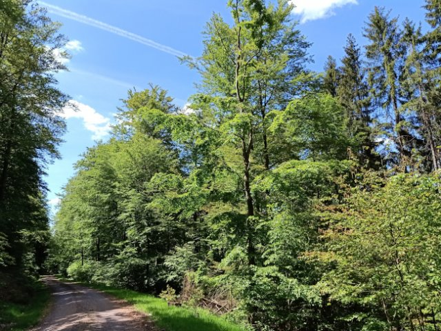Frauenwald Wanderweg