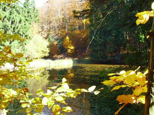 Herbst Knöpfelstaler Teich-Stützerbach