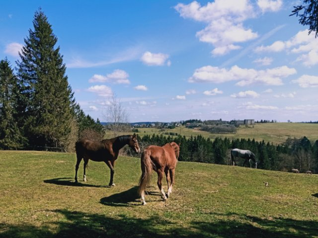Frauenwald Pferdekoppel
