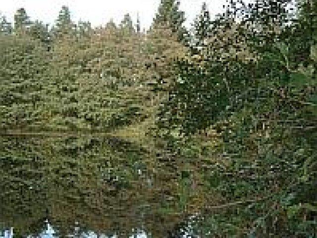 Teich bei Unterpörlitz, Foto: Martin Jäcklein