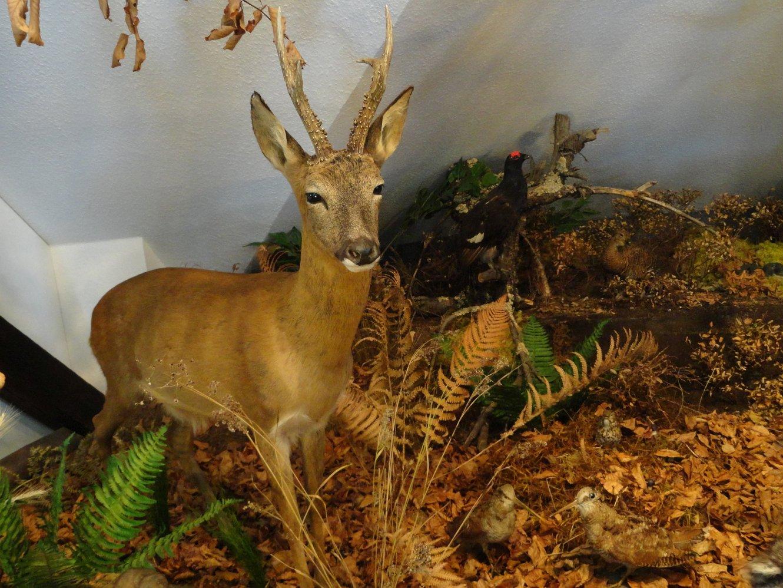 Frauenwald Ausstellung Biosphäre
