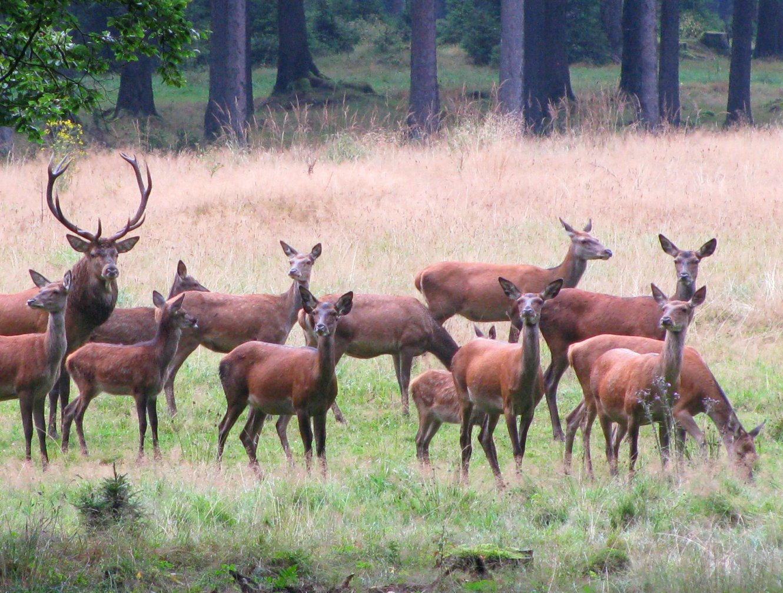Frauenwald Wildbeobachtung