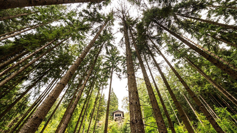 Waldbaden Stützerbach